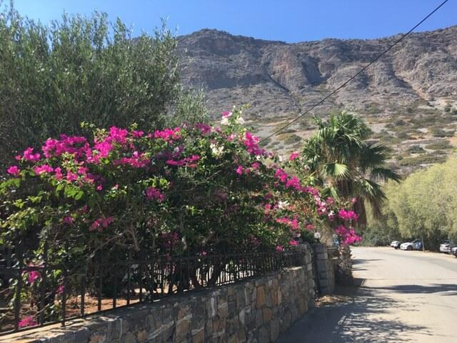 Plaka Kréta virágok