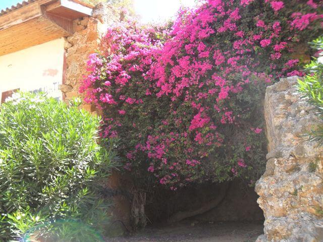 Chania virágok