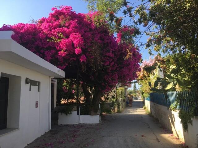Kréta Rethymno Virágok