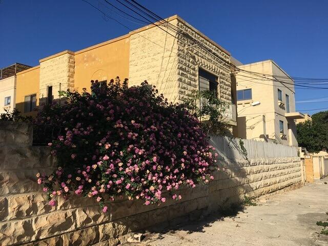Máltai nyelviskola szabadidő