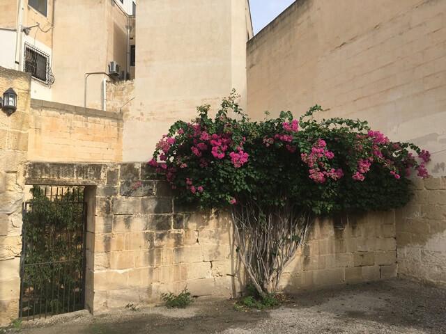 Maltalingua nyelviskola úton
