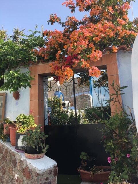 Santorini virág