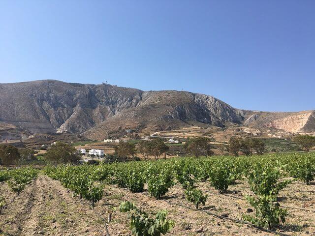 Szőlőültetvény Santorini