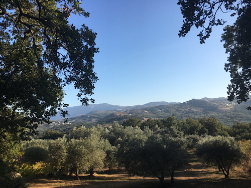 Olíva Spili Kréta