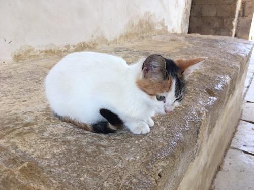Arkadi kolostor cica