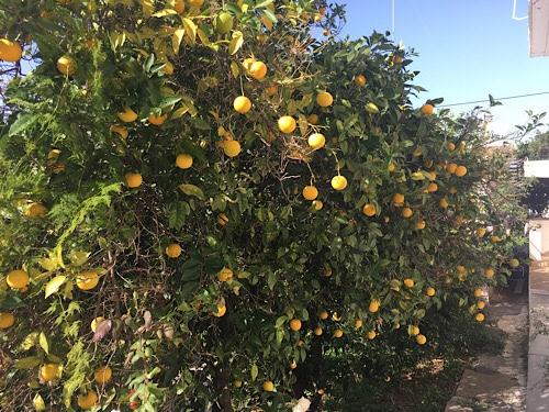 Perama narancs