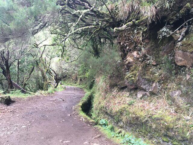 Madeira Rabacal