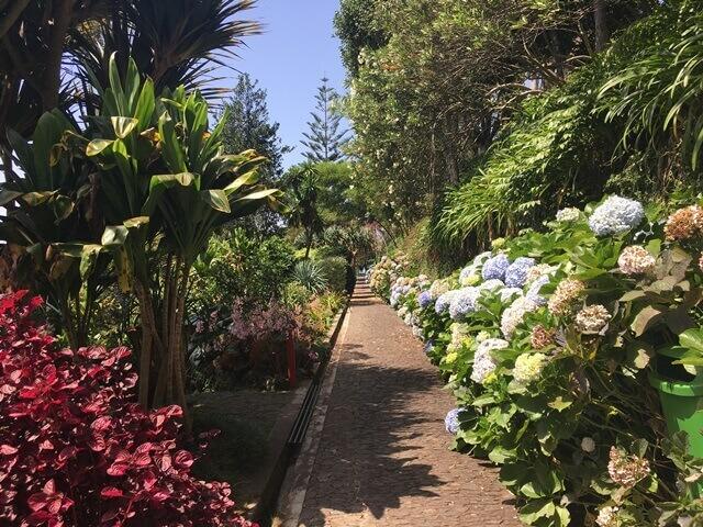 Trópusi kert Funchal