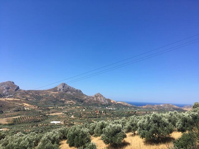 Kréta olíva